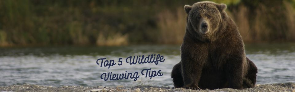 5 Top Tips for Wildlife Watching